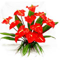 Flowers to Goa, Send Flowers to Goa