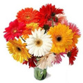 Send Anniversary Flowers to Goa